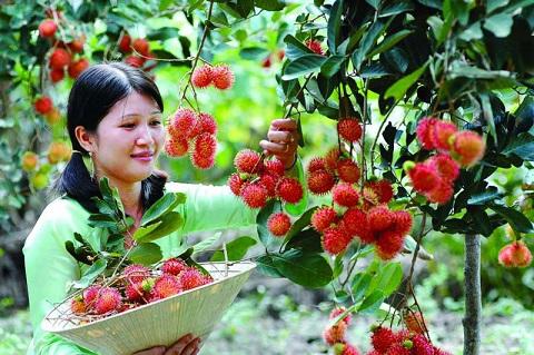 Tự tay hái trái cây ở miệt vườn du khách tỏ ra khá thích thú