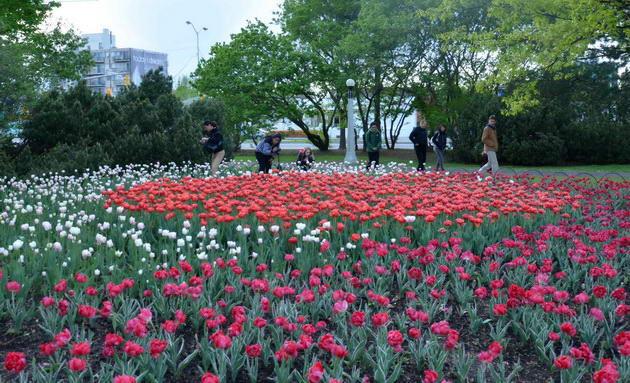 Sôi động với lễ hội hoa tulip lớn nhất thế giới, Canada