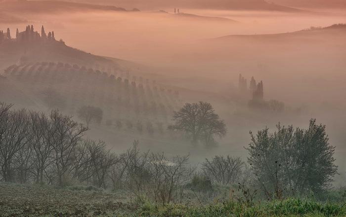 Những cánh đồng nho trong sương sớm