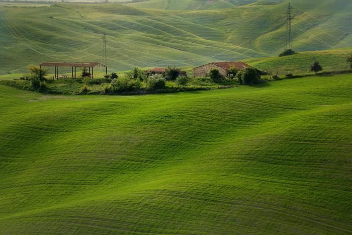Những thảm cỏ xanh mướt như những con sóng ở Tuscany