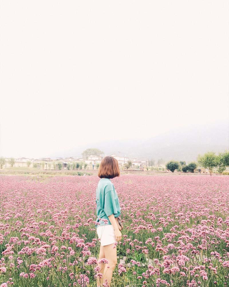 """Check-in """"so deep"""" tại Nông trại hoa Bốn Mùa ở Đại Lý – Vân Nam"""