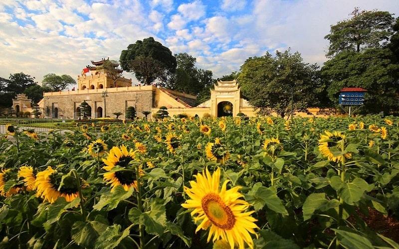 Vườn hoa Hướng Dương là điểm nhấn của thủ đô nói chung và khu di tích Hoàng Thành Thăng Long nói riêng