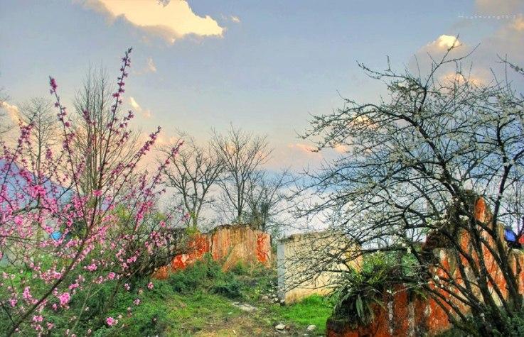 Xuân về những nẻo đường vùng cao