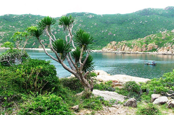 Kinh nghiệm du lịch vườn quốc gia Núi Chúa tại Ninh Thuận