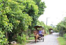 kinh nghiệm du lịch cù lao Thới Sơn