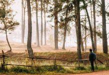 kinh nghiệm du lịch rừng thông Bản Áng