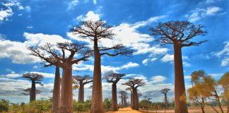 kinh nghiệm du lịch Madagascar