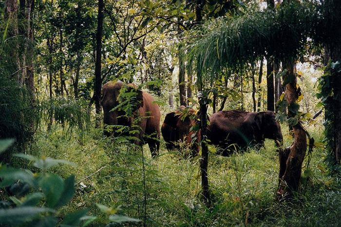 khám phá hệ sinh thái đa dạng khi du lịch vườn quốc gia Chư Yang Sin Đắk Lắk