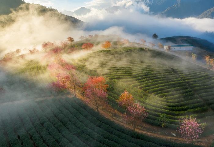 explore O Long Tea Hill