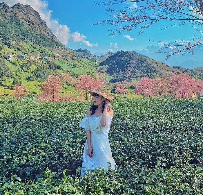 explore O Long Sapa Tea Hill