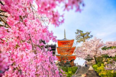 Cần Thơ - Tokyo - Fuji - Yamanashi 4N3Đ + Bay Vietnam Airlines