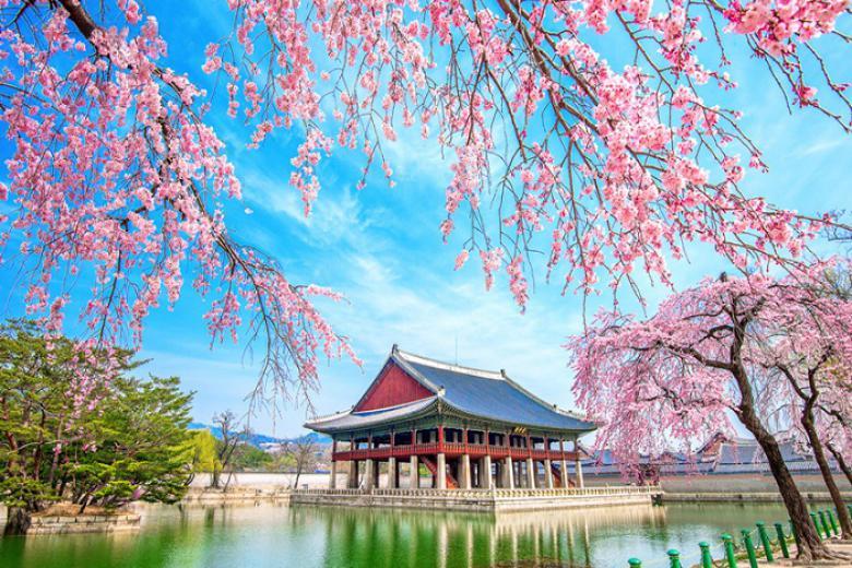Hà Nội - Đài Loan - Nhật Bản - Hàn Quốc 6N5Đ, Du Thuyền Majestic Princess, Khám Phá Mùa Hoa Anh Đào
