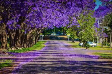Hà Nội - Johannesburg - Pretoria - Sun City - Cape Town 8N7Đ Mùa Phượng Tím
