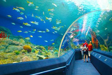 Cần Thơ -HCM - Singapore - Sentosa - Sea Aquarium - Garden By The Bay - Spectra Show 3N2Đ