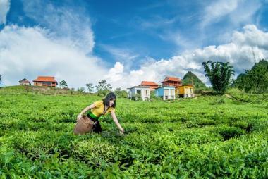 Hà Nội - Mộc Châu - Happy Land 2N1Đ