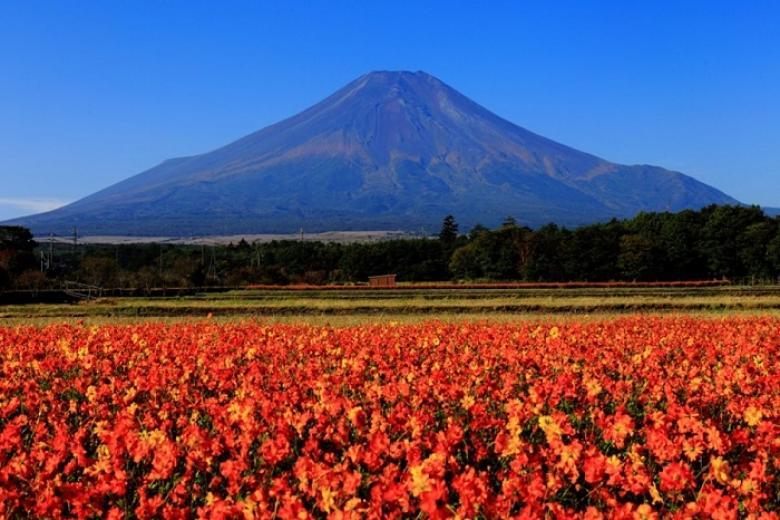 Hà Nội - Tokyo - Hakone - Phú Sĩ 4N Bay VN