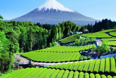 Nhật Bản Tết Dương Lịch: Hà Nội -Tokyo - Núi Phú Sĩ - Yamanashi - Kyoto - Osaka 6N5Đ Bay Vietnam Airlines