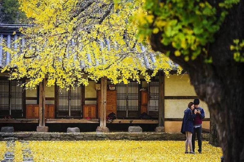 Đà Nẵng - Seoul - Nami - City Tour - Everland 5N4Đ