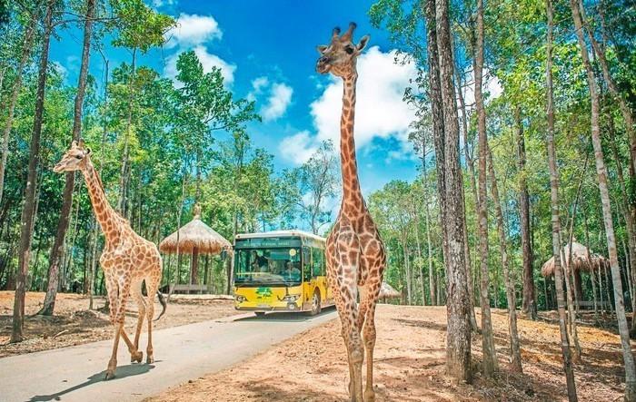 vinpearl_safari_phu_quoc