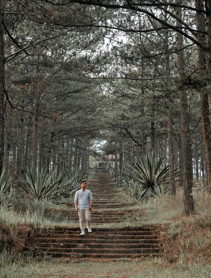 Lăng Nguyễn Hữu Hào là một điểm check in rừng thông rất đẹp