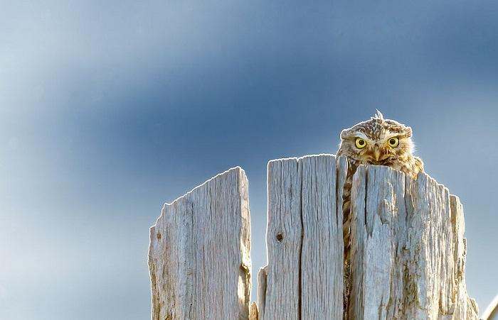 Khi đang trên đường đi làm, nhiếp ảnh gia người Anh Dan Gerard phát hiện một hình bóng đập vào mắt mình trên ngọn cây chết.