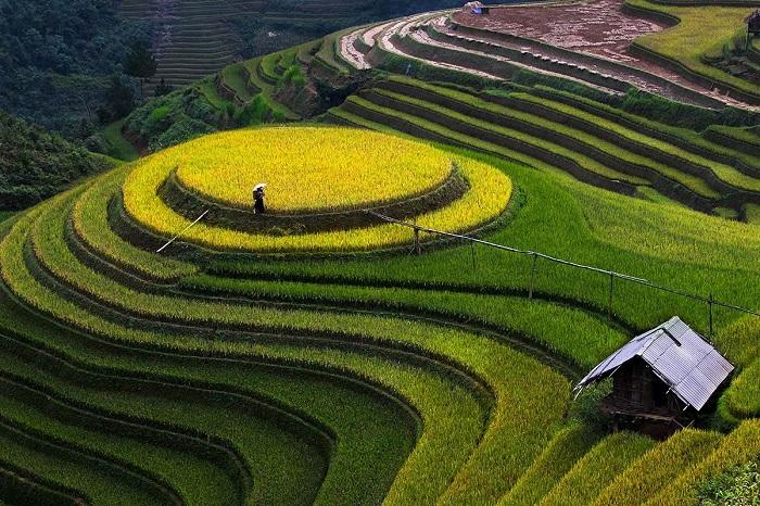 Tháng 9 cũng là thời điểm lúa bắt đầu chín ở Hà Giang.