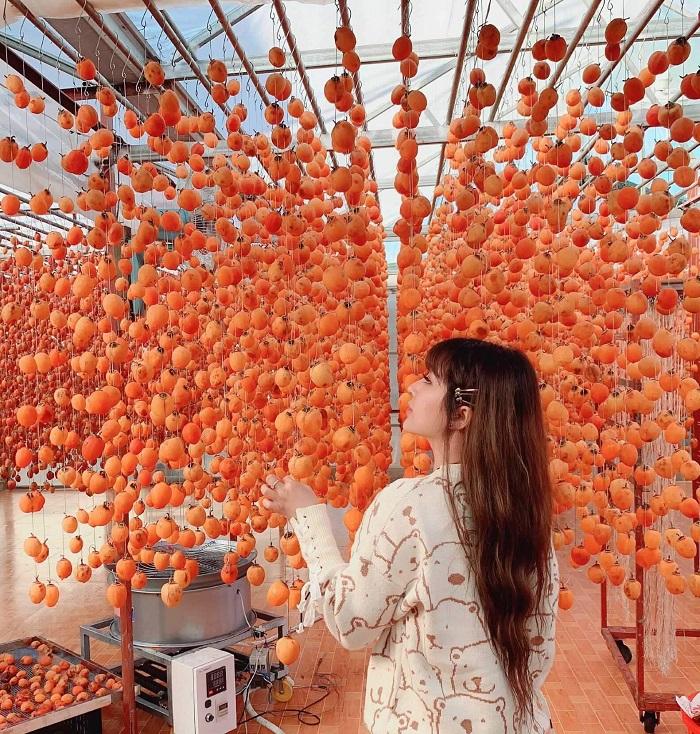 Tháng 9 cũng là thời điểm mùa hồng chín ở Đà Lạt.