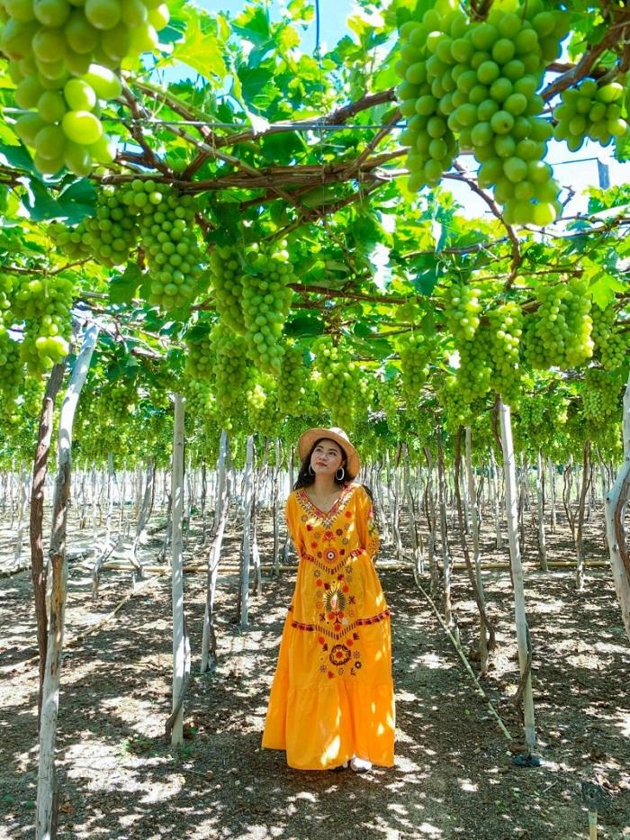 Check in vườn nho ở Ninh Thuận tháng 9