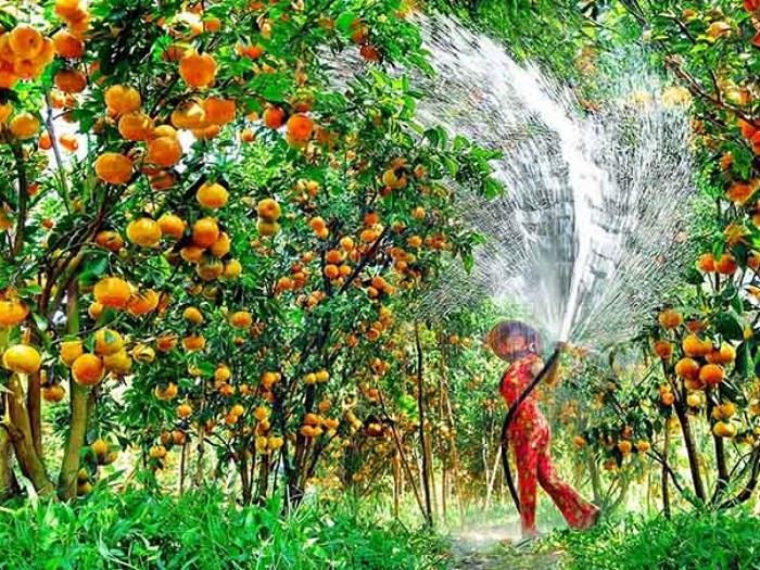 Tham quan vườn cây ăn trái ở Cần Thơ.