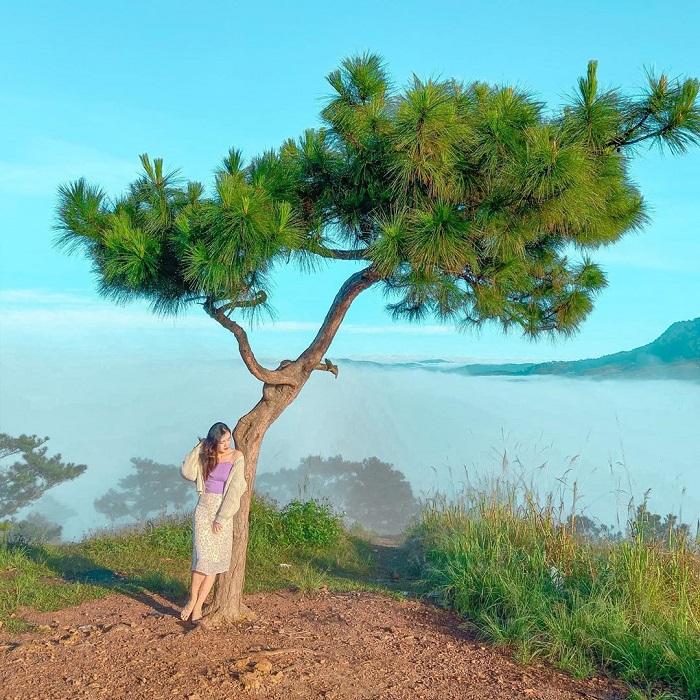 Cây thông cô đơn ở đồi Thiên Phúc Đức điểm check in sống ảo hút giới trẻ.