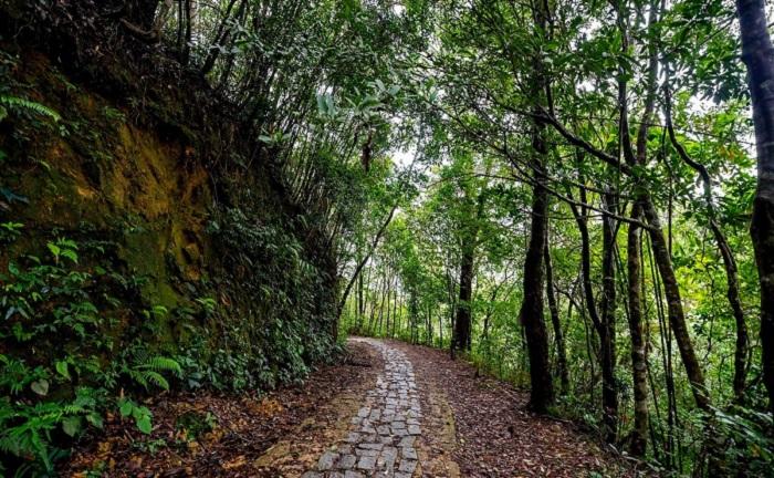 Con đường rừng dẫn đến VQG Bạch Mã.