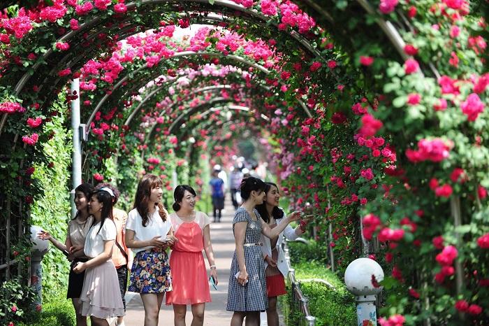 Lễ hội hoa hồng và rượu vang Sapa 2020, theo kế hoạch được tổ chức từ 21 - 23/8 tại thị xã Sapa, tỉnh Lào Cai. Chương trình đã chuyển thời gian,dự kiến diễn ra tháng 10/2020