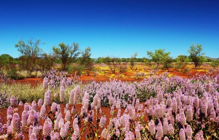 mùa xuân nước Úc