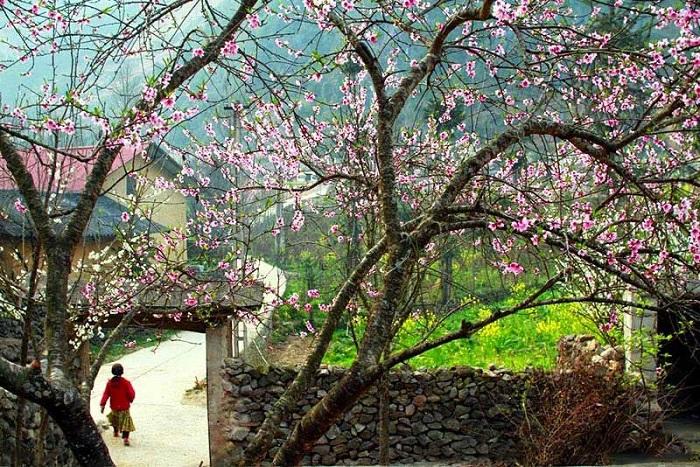 nàng thơ núi rừng cẩm nhận hơi thở nhịp sống đẹp nhất ở hà giang vùng núi tây bắc việt nam - 12