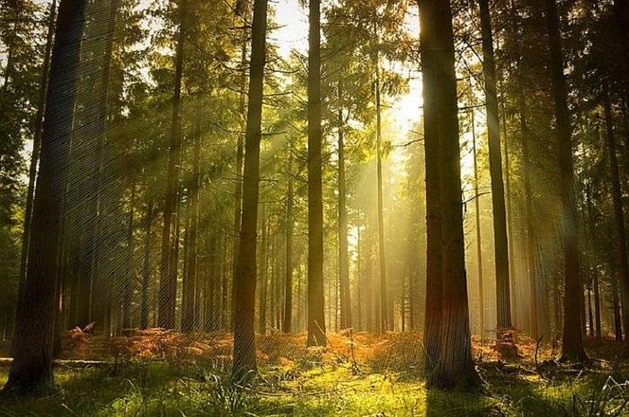 nàng thơ núi rừng cẩm nhận hơi thở nhịp sống đẹp nhất ở hà giang vùng núi tây bắc việt nam - 4