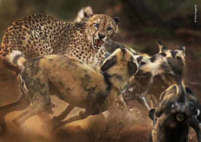 động vật hoang dã