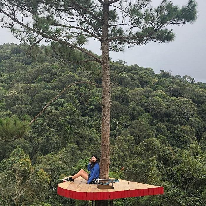 Check in những quán cafe ở trong rừng ở Đà Lạt.