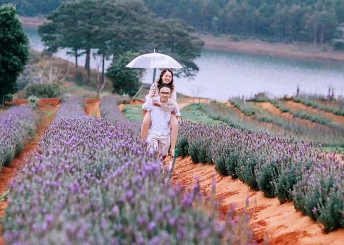 Vườn hoa Đà Lạt. Ảnh: mtrend.vn