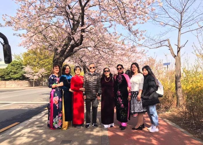 Du khách tham gia tour du lịch Hàn Quốc mùa hoa anh đào