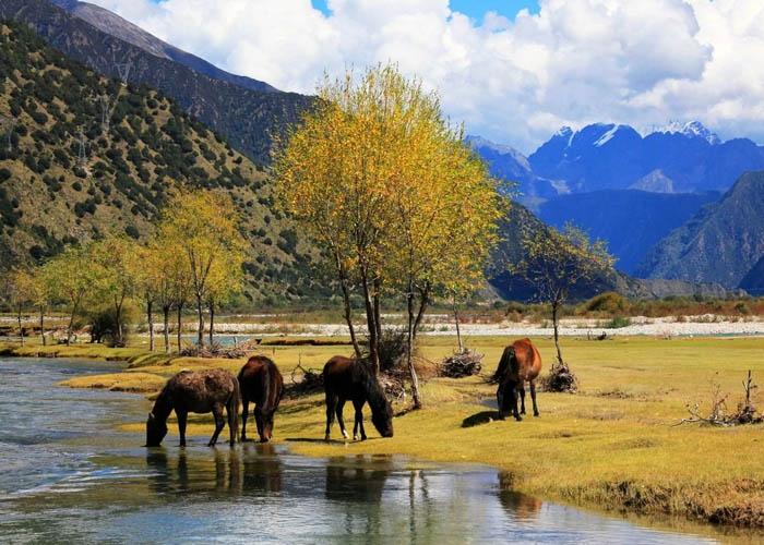 Cao nguyên Tây Tạng nằm ở độ cao hơn 4.900 m so với mực nước biển. Ảnh: lumsanews.it