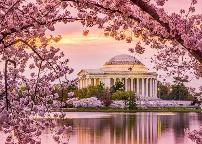 Lễ hội hoa anh đào ở hồ Tidal, Washington. Ảnh: tripstodiscover.com