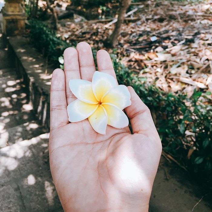 hoa sứ Vũng Tàu