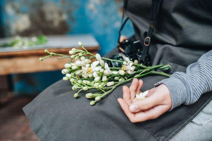 mùa hoa bưởi Hà Nội