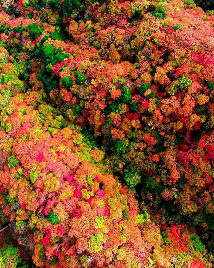Mùa thu là thời điểm đẹp nhất để đến Irohazaka. Khi đó, tán lá bắt đầu đổi màu, cánh rừng được tô điểm bởi sắc đỏ, vàng ấm áp của cây phong, cây thanh lương trà… từ giữa tháng 10 đến đầu tháng 11.