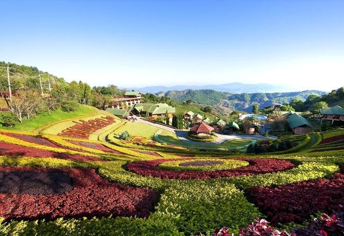Những cánh đồng hoa rực rỡ thay cho cánh đồng hoa anh túc ngày xưa. Ảnh: mytour.vn
