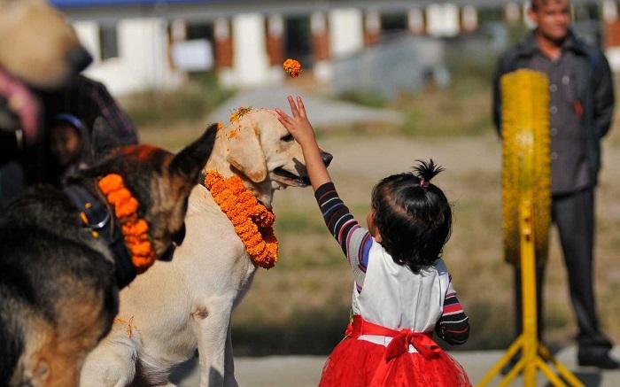 Chó: Người bạn tốt nhất của con người cũng được tôn thờ ở một số vùng của Nepal. T