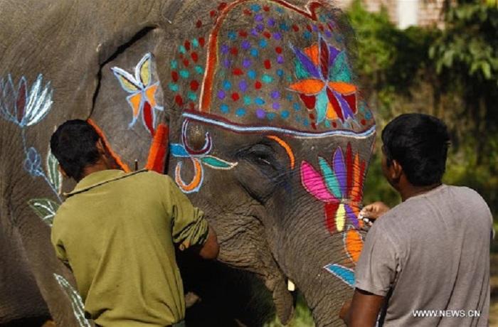 Loài này được thờ phụng nhiều trong các ngôi đền miền Nam Ấn Độ.