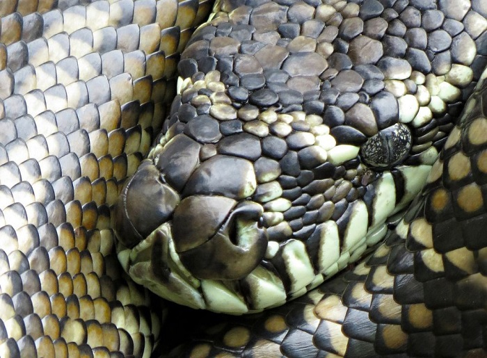 Rắn: Đạo Kito coi rắn có sự liên hệ với ma quỷ. Tuy nhiên, ở một số nền văn hóa khác, nó lại được đề cao và coi như biểu tượng cho khả năng sinh sản.