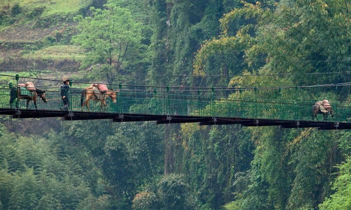 Một đoạn của con đường Tea Horse Road. Ảnh: vyctravel.com