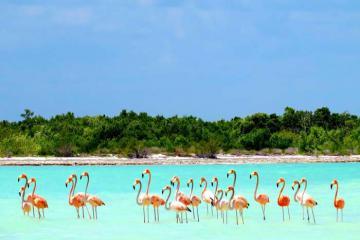 Ghé thăm đảo Isla Holbox, Mexico - vùng đất yên bình không có bóng dáng của xe hơi